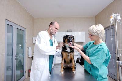 С сего начать обучение на ветеринара